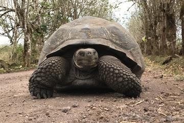 12-Day Galapagos Expedition on 4 Islands