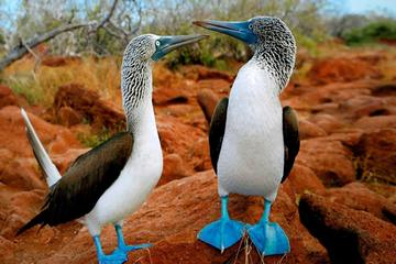 3-Day All Inclusive Classic Galapagos 2 Islands Hopping