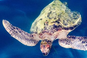 4-Day All Inclusive Galapagos Island Hopping - Tourist Class