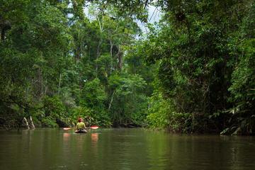 5 Day Cuyabeno Amazon Experience