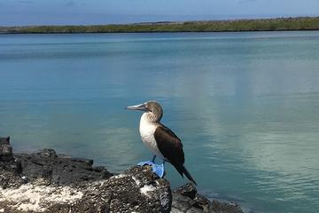 5-Day Galapagos Islands Exploration