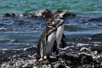 6 Tage Galapagos-Inselhopping