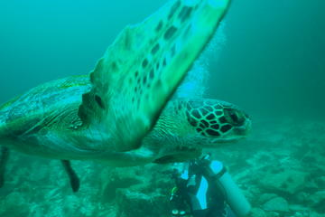 8-Days All Inclusive Galapagos Island Hopping