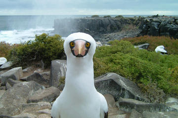 9-Day Galapagos Island Hopping and Quito Tour from Quito