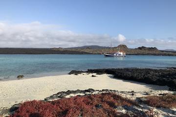 Samba Cruise At Galapagos Islands
