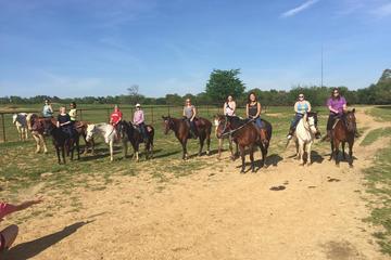 Day Trip Memphis Trail Ride by Horseback near Memphis, Tennessee