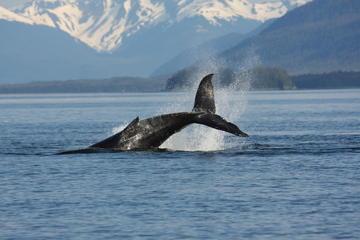 Avistamiento de ballenas y balneario Blue Lagoon con entrada y...