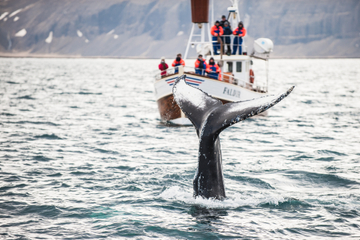 Avistamiento de ballenas y laguna azul directo y aeropuerto de...