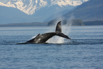 Avistamiento de ballenas y laguna azul