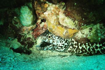 Two Tank Dive in the Fajardo Islands