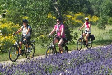 Private Guided Bike Tour from Avignon