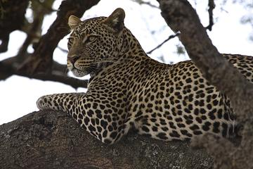 5-Day Tanzania Adventure Safari from Arusha