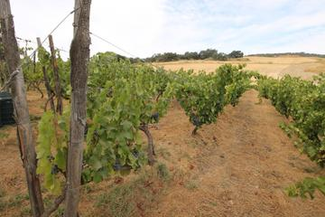 Malaga Shore Excursion: Private Winery Tour with Wine Tasting and...