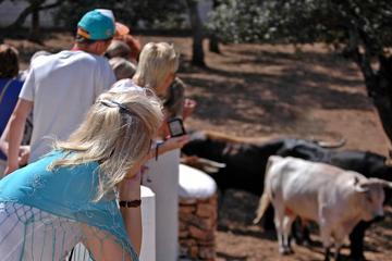 Visit an Andalusian Horse Breeding Farm in Ronda