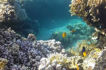 Full-Day Snorkeling Tour to Utopia Island from Luxor