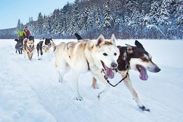 Dog Sledding Tour from Toronto