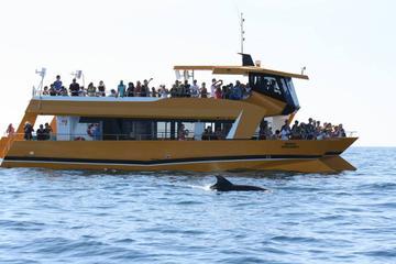 Viagem de barco pelo litoral de Algarve com golfinhos, saindo de...