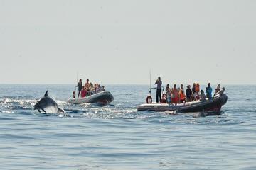 Viagem de observação de golfinhos e pelas cavernas saindo de Albufeira