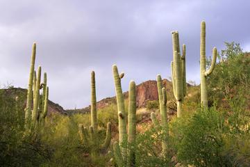 Tour en petit groupe: Excursion de luxe d'une journée de Phoenix et...