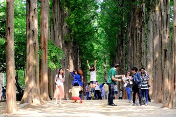 Nami Island and Petite France Tour...