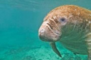 Private Manatee Swim Tour