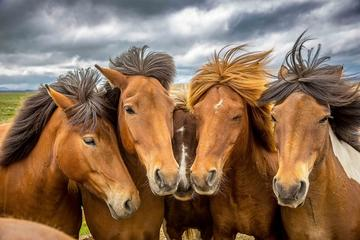 1.5-Hour Icelandic Horse and Stables ...