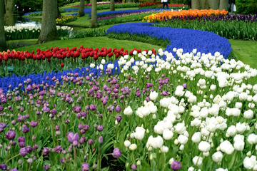 Half-Day Keukenhof Gardens Tour from...
