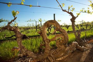 Kaesler Vineyard Old Vine Tour