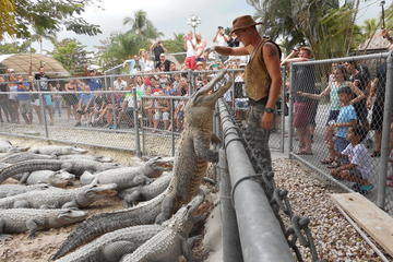 Excursion dans les Everglades en hydroglisseur et spectacles...