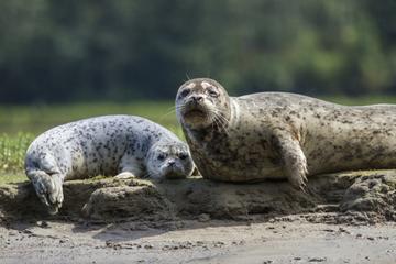 Buceo con focas en Nanaimo desde Vancouver