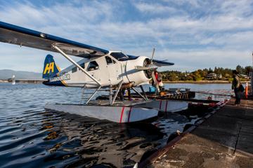 Voo de hidroavião para Victoria e Cruzeiro com observação de baleias