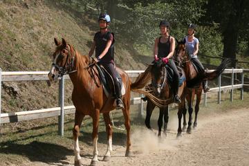 Half-Day Horseback Ride in Tuscany for beginner riders