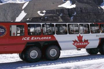 Ice Explorer Glacier Tour and Glacier Skywalk