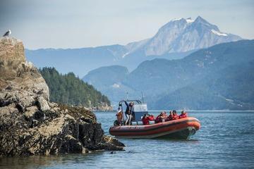 Crociera con safari marittimo di Howe Sound