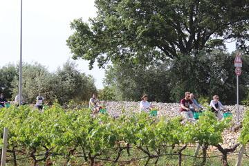 Privat e-cykeltur med vinprovning