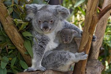 San Diego Zoo, Transport und Eintritt
