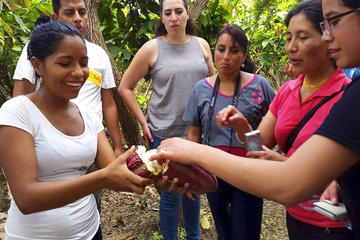 Cacao Farm Excursion Day Trip from Guayaquil