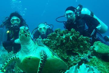 Diving Tour: Bahia Darwin and Carahua