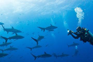 Diving Tour: Española Island
