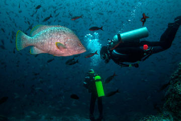 Diving Tour: Kicker Rock in the Galapagos