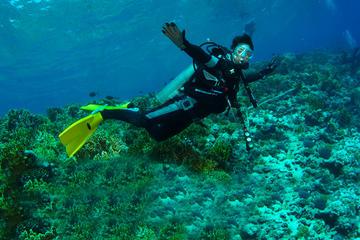 Diving Tour: Punta Pitt in The Galapagos