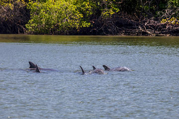 Dolphin Watching in Puerto El Morro from Guayaquil