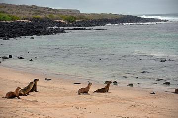Half-Day Santa Cruz Island-Bahia Tour