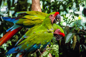 Tour to the Zoo El Pantanal in Guayaquil