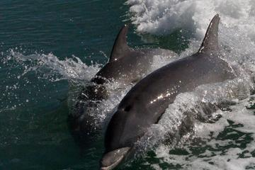 2-Hour Guided Dolphin Boat Tour Near Marco Island