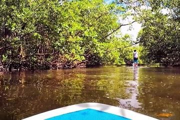 Blackwater River One Way Paddle Board Tour