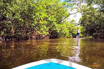 Blackwater River Paddle Board Tour