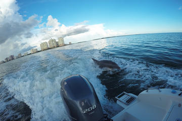 Dolphin Watching and Shelling Marco Island Eco-Tour