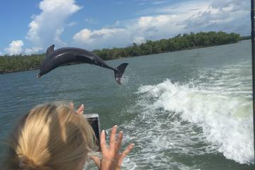 Marco Island Dolphin-Watching and...