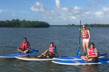Marco Island Paddle Board EcoTours